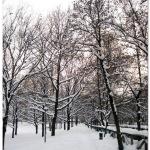Cartolina / Bologna, ancora sotto la neve